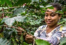 New report outlines more than 300 community-based farming solutions to protect biodiversity