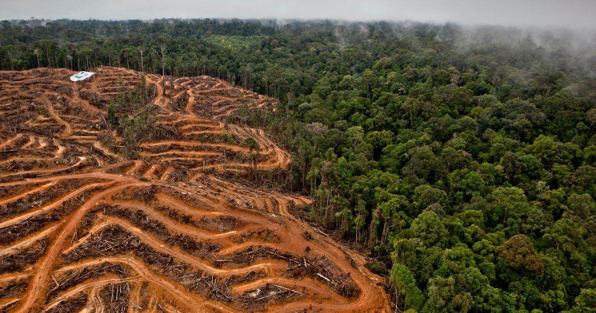 Oreo, la galleta rellena de deforestación