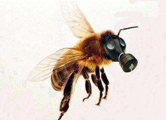 España pondrá a las abejas en peligro si no respalda la guía europea para protegerlas de los plaguicidas