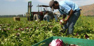 El cambio climático y la falta de alimentos: 1 de cada 10 habitantes del planeta están subalimentados canvi climàtic aliments