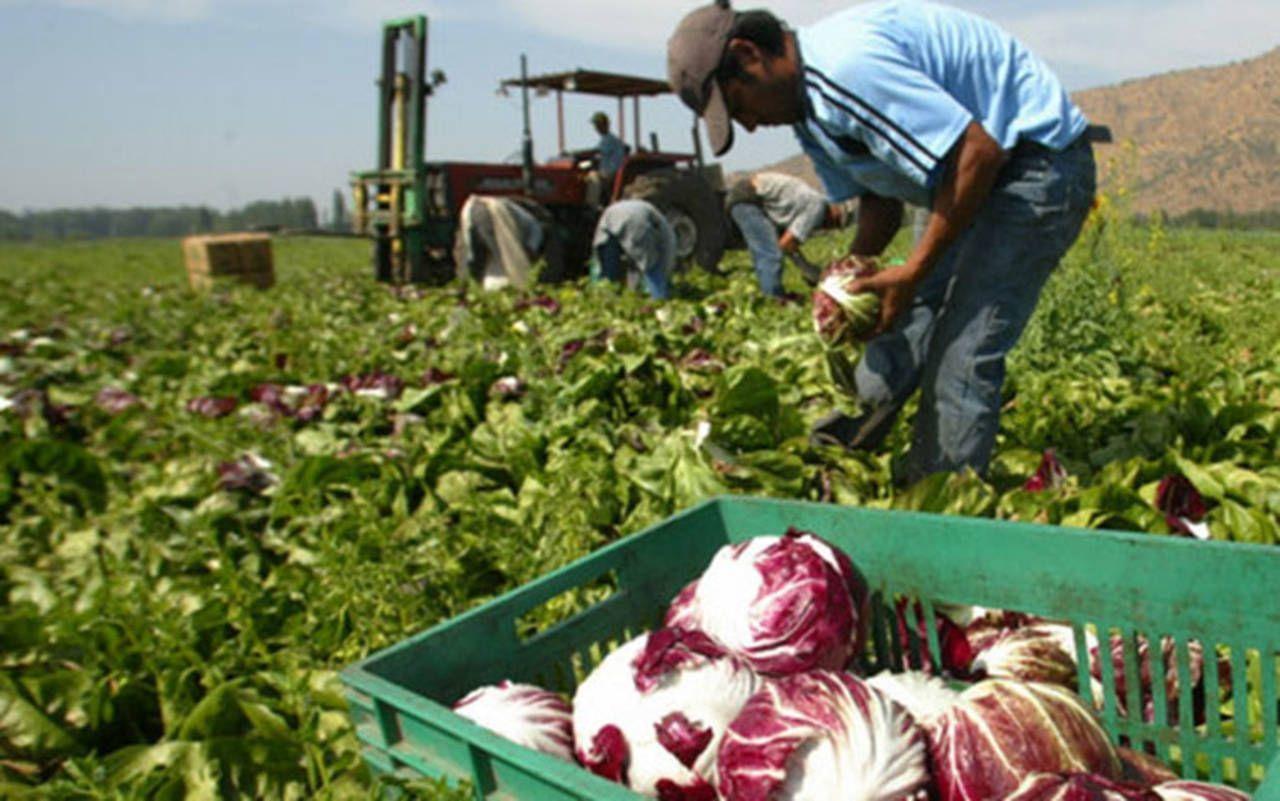 El cambio climático y la falta de alimentos: 1 de cada 10 habitantes del planeta están subalimentados