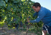 La viña y el vino se hacen ecológicos vi ecològic vino ecológico