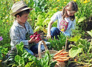 consumo ecológico bio eco actual biocultura