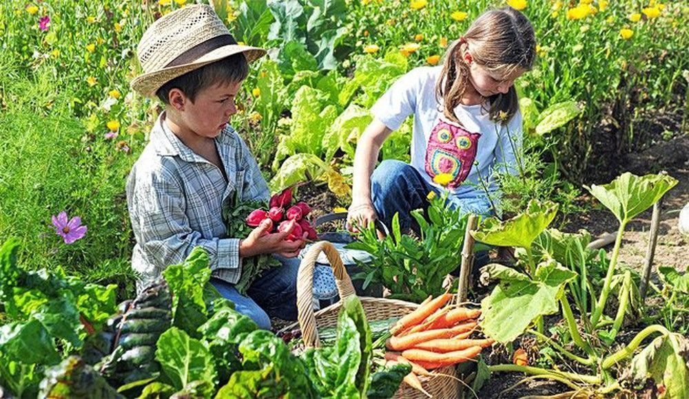 consumo ecológico plan europeo alimentación ecológica
