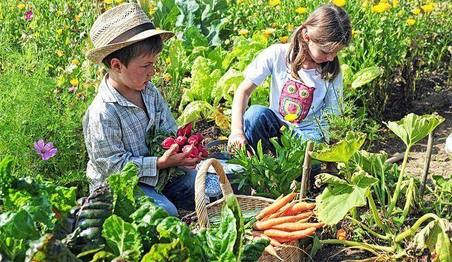 """Consumo ecológico: Lo """"bio"""" empieza en la cuna"""