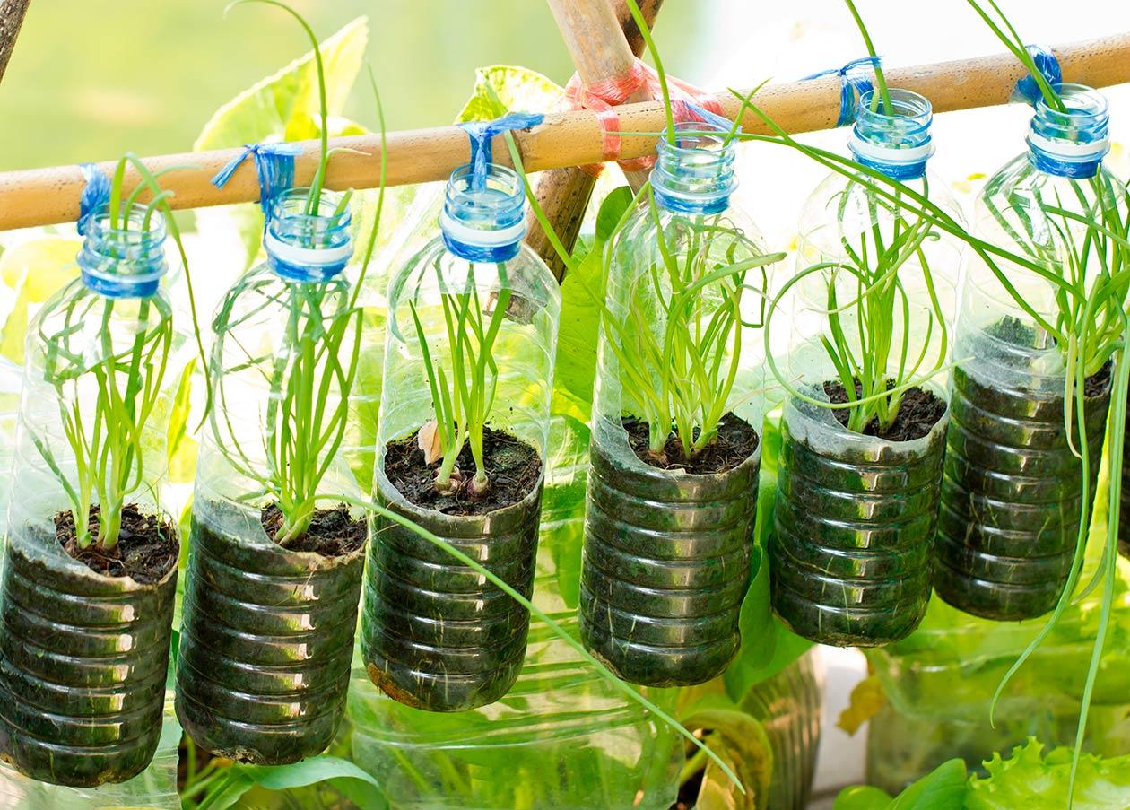 Bio jardinería comestible en balcones