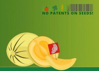 End the legal chaos at the European Patent Office! acaba con el caos legal en la oficina europea de patentes oep