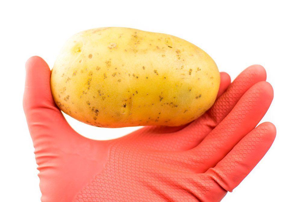 Patatas transgénicas, un riesgo innecesario