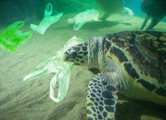 Ofegats pel plàstic