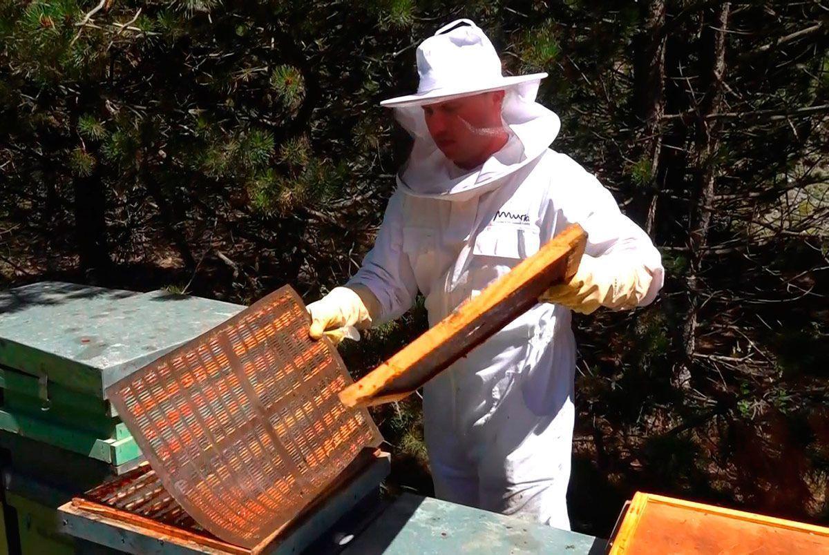 Las abejas siguen desprotegidas ante los insecticidas