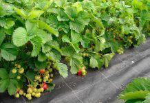 Alimentació agroecològica contra el canvi climàtic