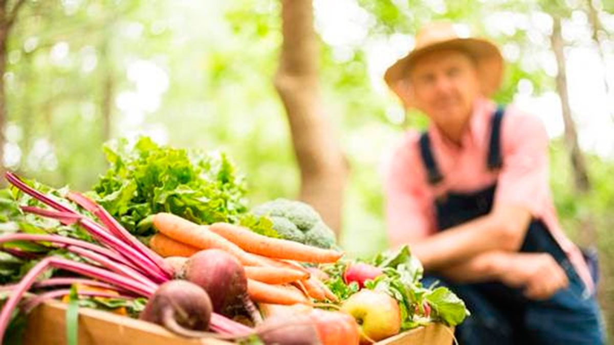 Transición a una eco-nomía limpia y un ejemplo: la agricultura biológica
