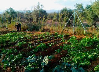 Alimentación agroecológica contra el cambio climático