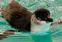 Emergencia Climática: Llevaría 50 millones de años recuperar las aves extinguidas en Nueva Zelanda