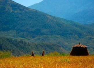 100% organic agriculture is the key to combat land degradation
