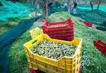 Què és la Agroecologia?