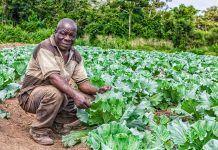 Octubre, mes Fairtrade, la cultura i el seu origen