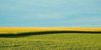 IFOAM exigeix garantir la traçabilitat dels nous OMG