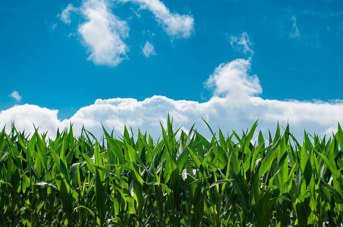 European Commission unveils European green Deal