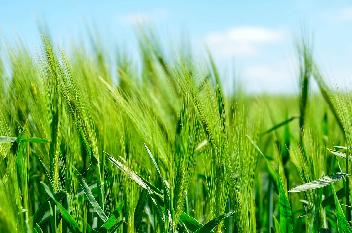 Organic movement calls for agroecology to be at the heart of the EU strategy