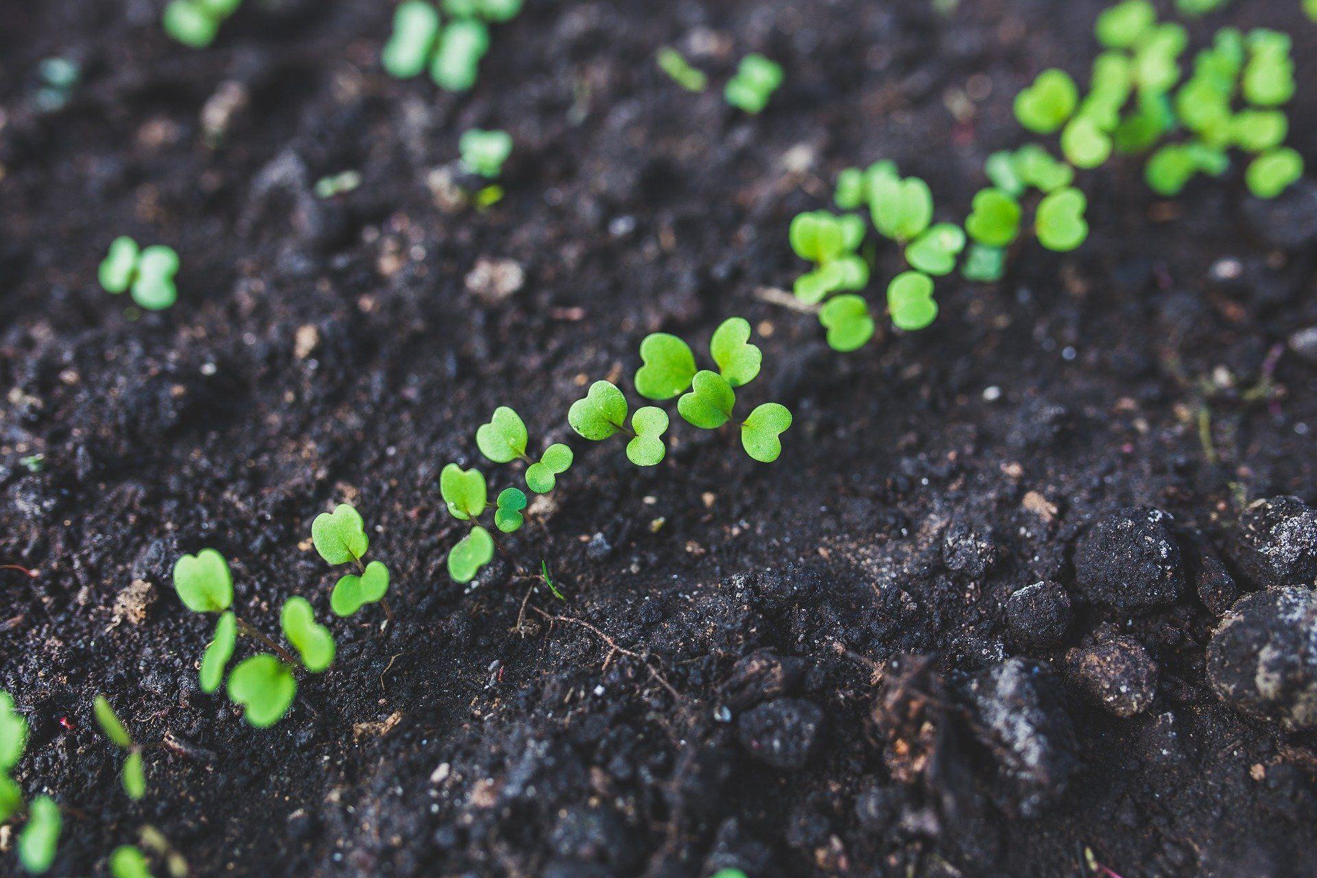 Las tierras de cultivo ecológico se sitúan en más de 71,5 millones de hectáreas