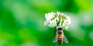 Protegiendo la colmena: los propóleos