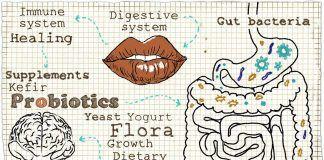 Tingues cura del sistema digestiu amb la teva alimentació