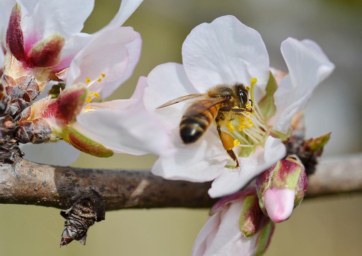 Cómo contribuir a la recuperación de las abejas