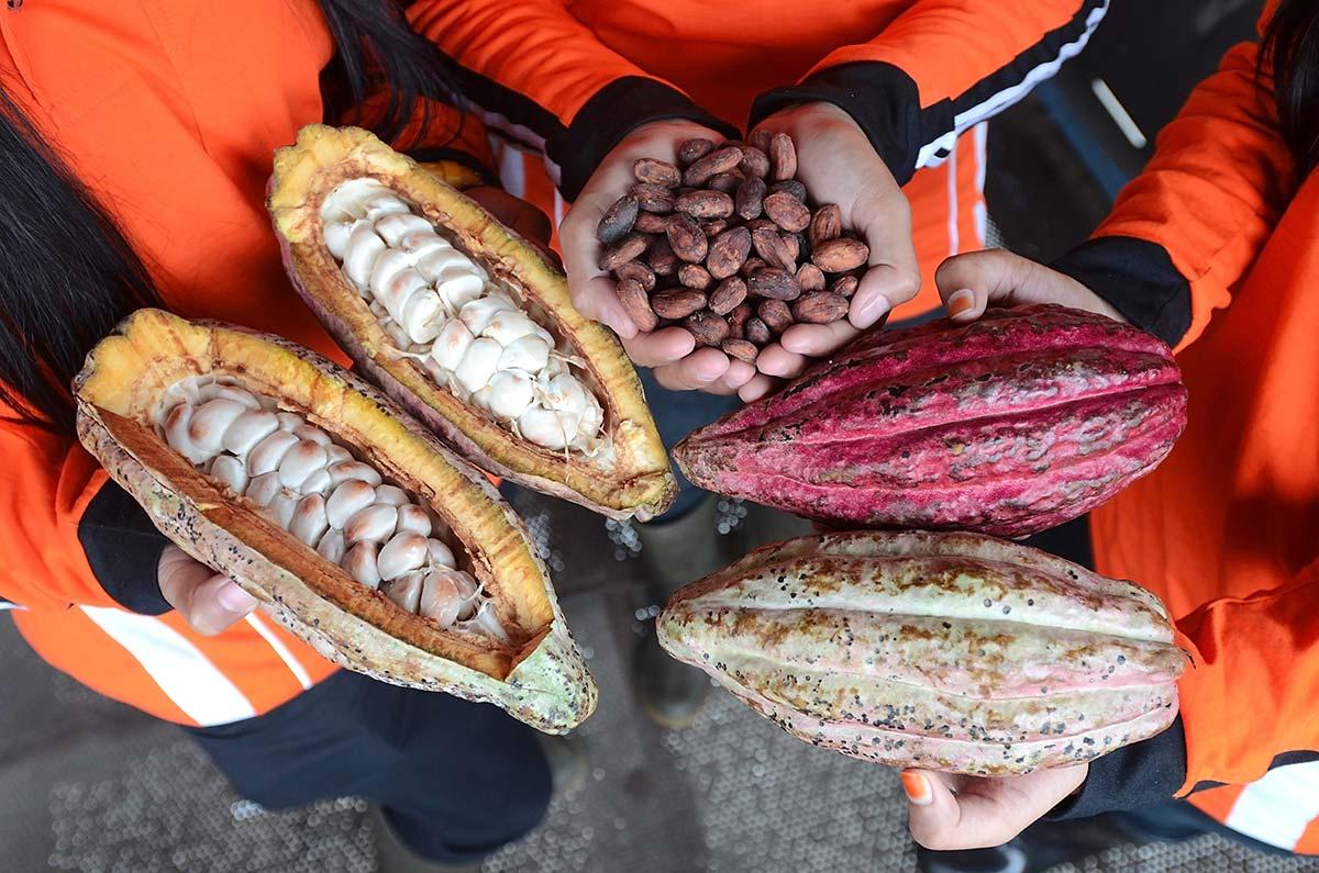 ¿Qué hay detrás del cacao instantáneo o tableta de chocolate?