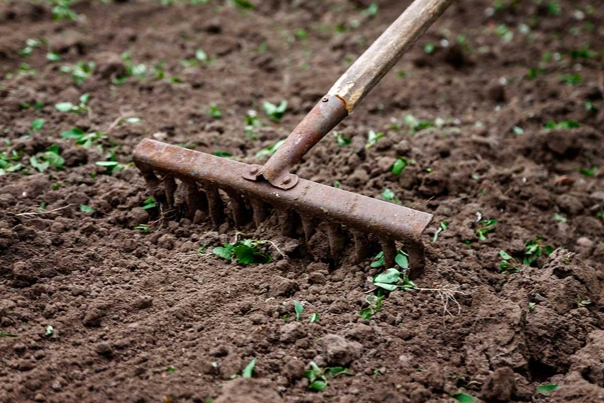 El necesario proceso detox de nuestros suelos de cultivo