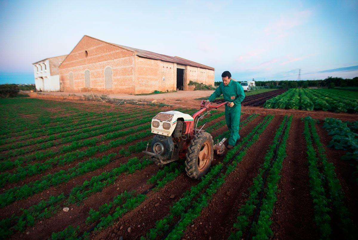 Agroecología local y de temporada en Valencia en tiempos de crisis: el ejemplo de Saifresc