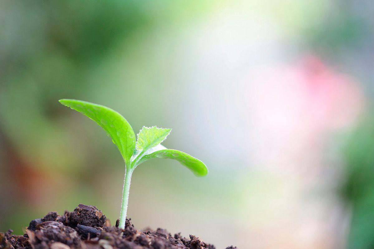 Unión Europea: 25% de la agricultura en la UE deberá ser ecológica en 2030