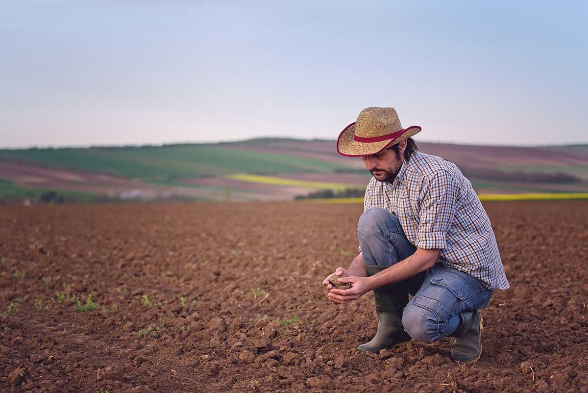 El necesario proceso detox de nuestros suelos de cultivo (ll)