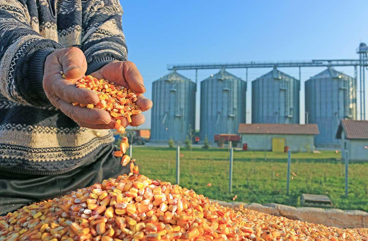 Producción agroalimentaria después del COVID 19, ¿un nuevo modelo alimentario?
