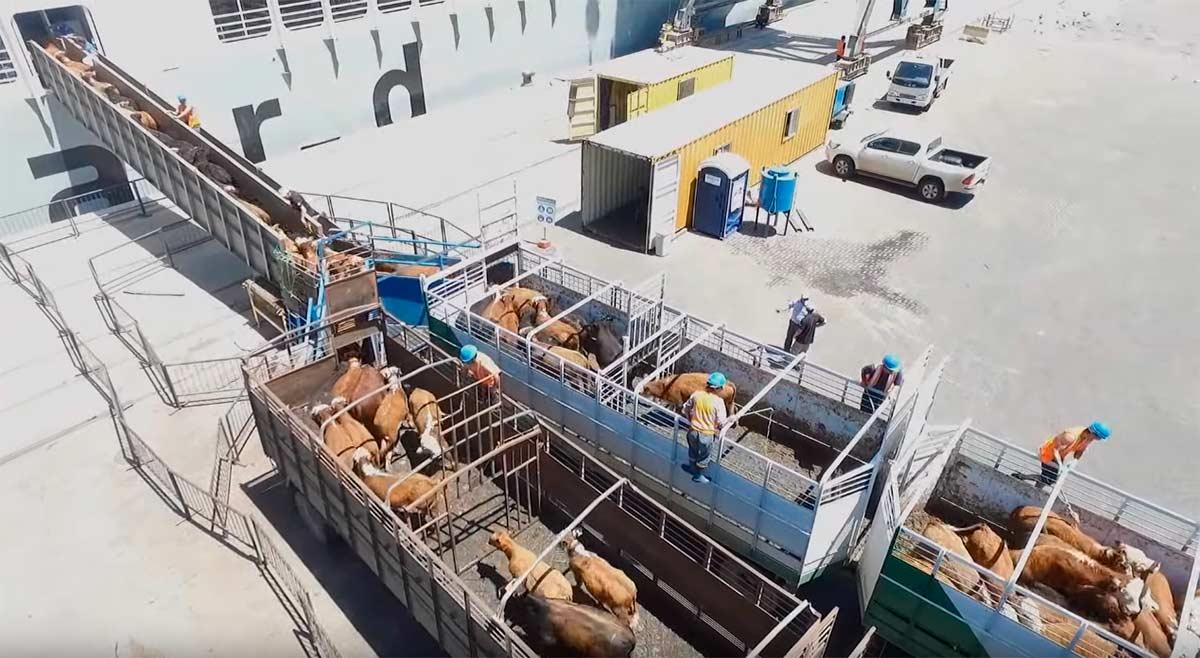 Reflexión sobre la exportación de animales vivos a oriente próximo