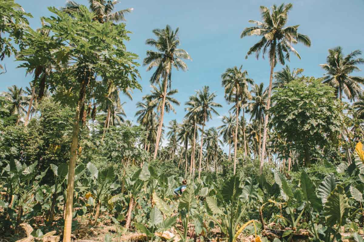 The Bittersweet Life of an Organic Cacao Farmer in Samoa