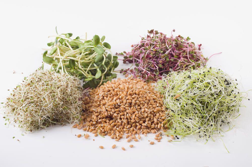 germinats per als teus plats
