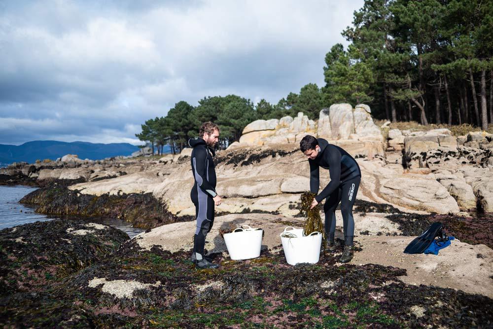 Galícia és un referent a Espanya en el tractament i venda d'algues per a consum humà
