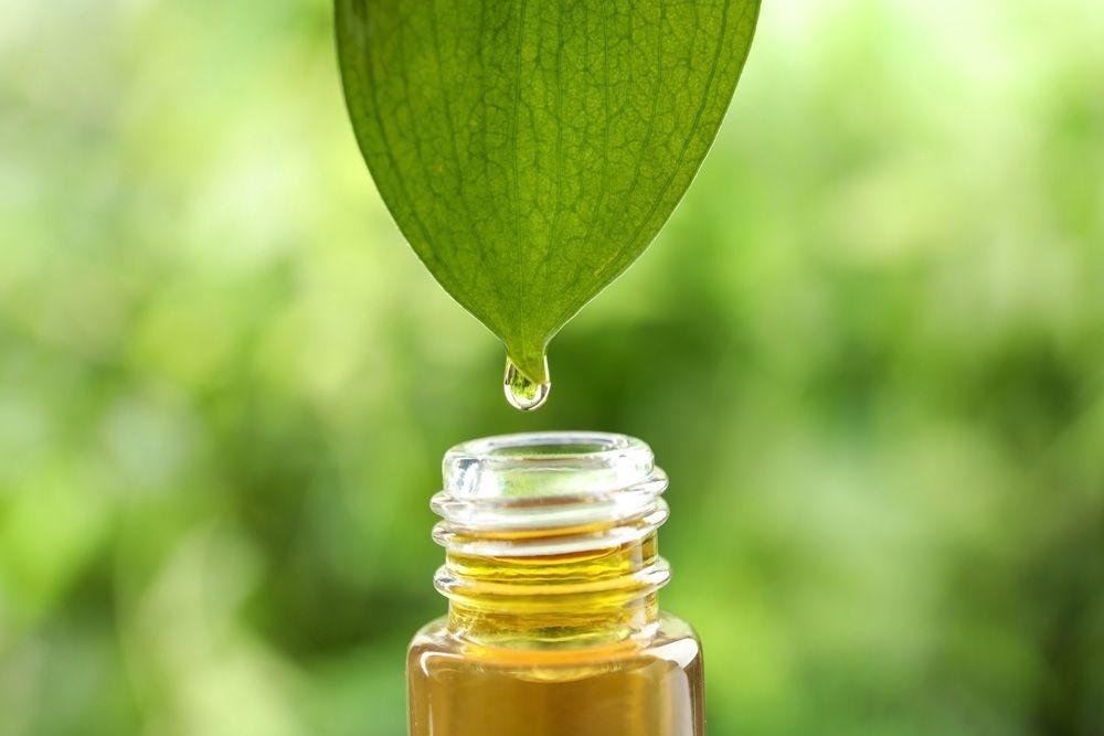 Tinturas y aceites esenciales: aprovechar el potencial de las plantas