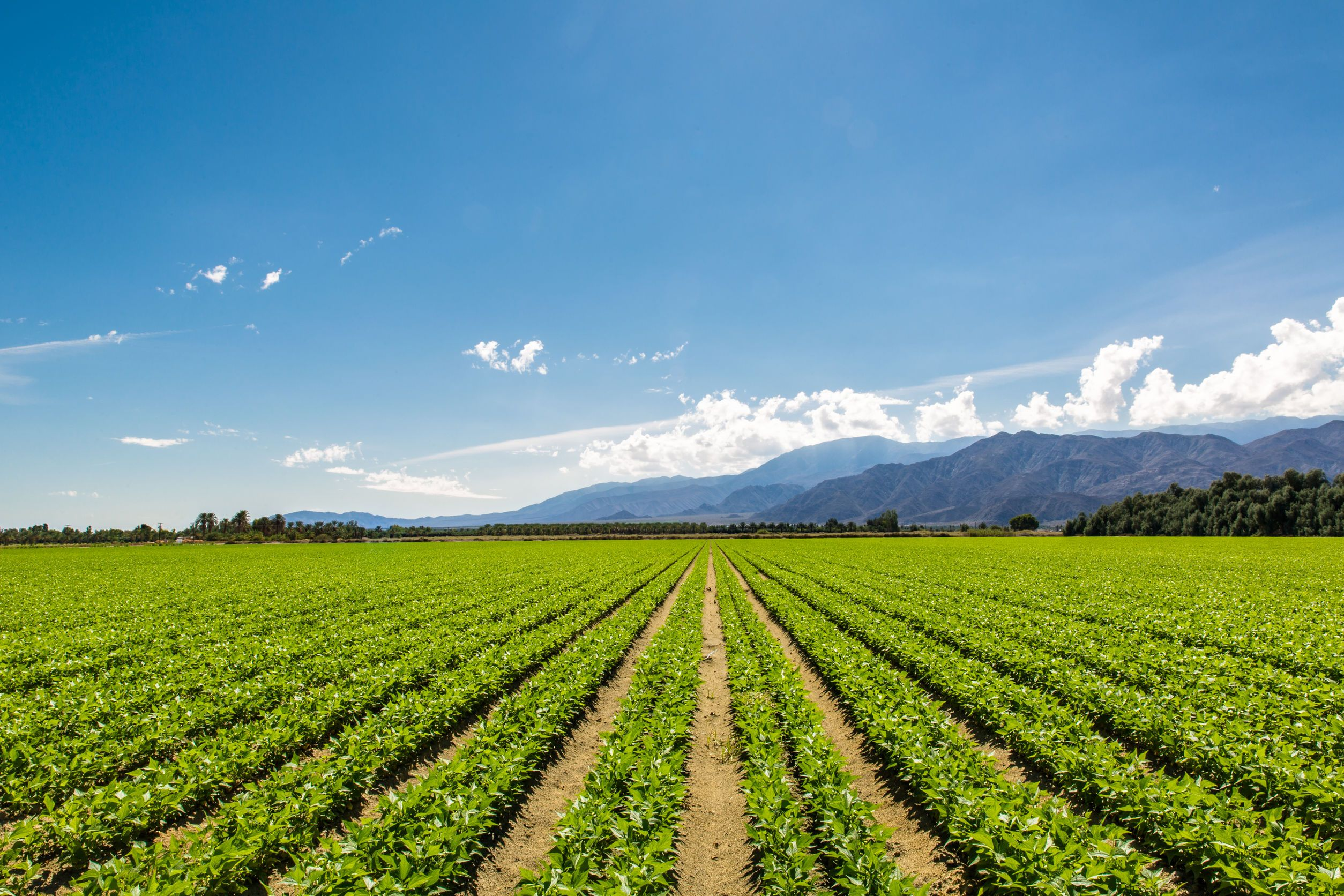 agriculutra ecológica