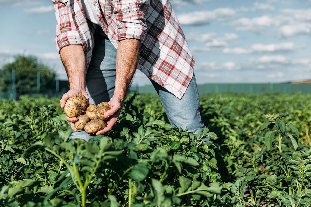 Farm to Fork Patatas Ecológicas