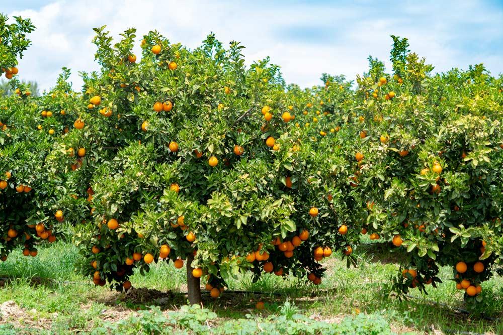 Alumnos de toda la Comunitat Valenciana recibirán formación sobre agricultura ecológica, alimentación sana y respeto por el medio ambiente
