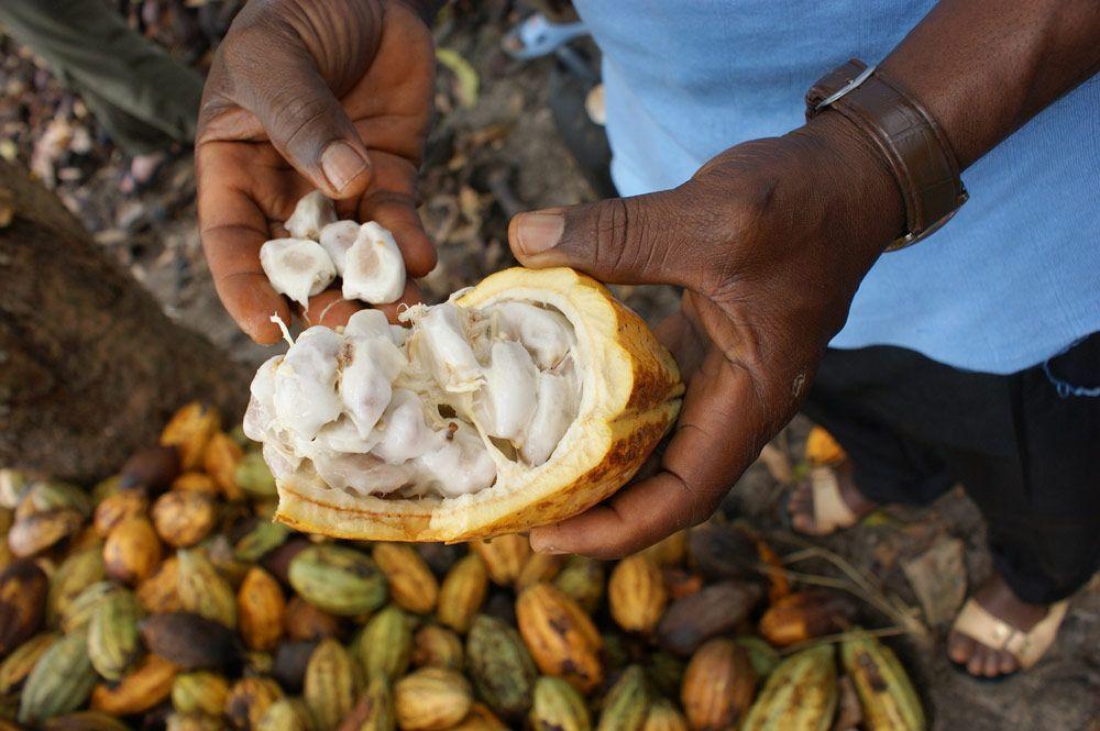La venta de cacao certificado con sello Fairtrade crece en España más de un 730%