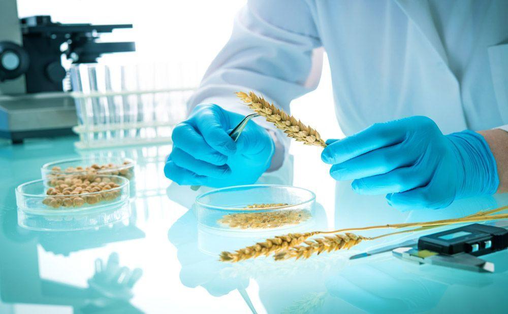 Desregulación de los nuevos OGM: el movimiento ecológico levanta la bandera roja