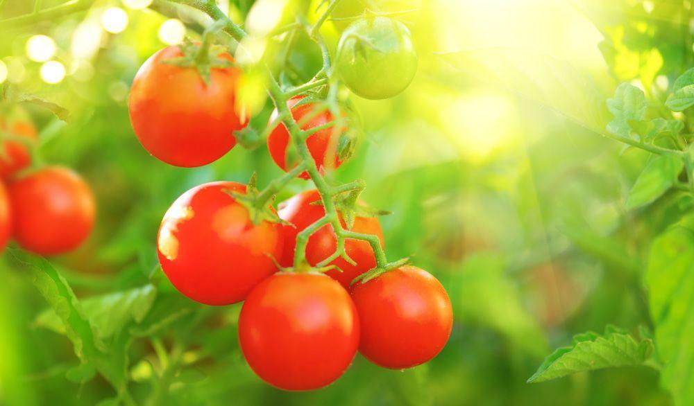Estudio Efsa 2019: 1 de cada 4 alimentos contiene residuos de pesticidas