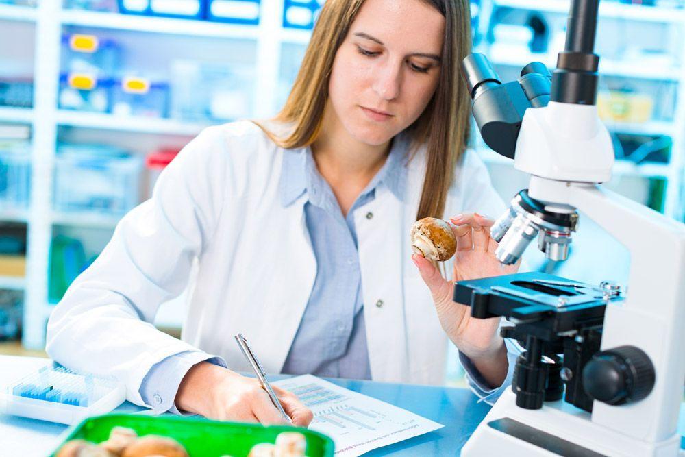 Los hongos: un laboratorio medicinal enterrado bajo tierra