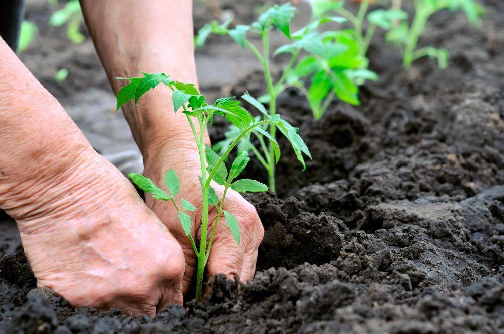 """""""25% ecológico en 2030, podemos lograrlo"""""""