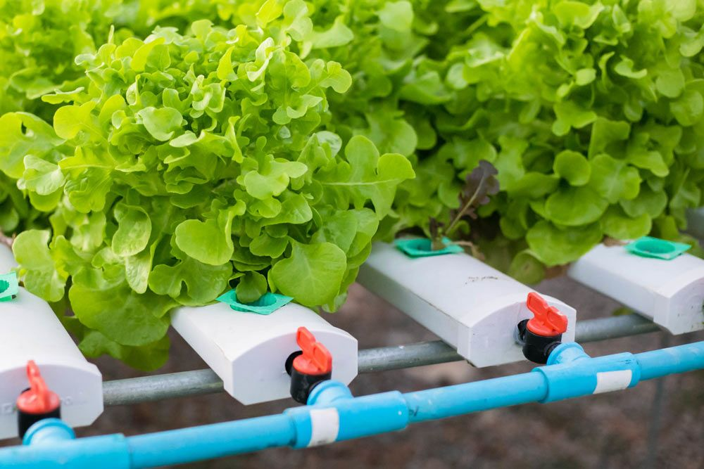 """Basta con añadir agua: la batalla sobre la """"hidroponía ecológica"""""""