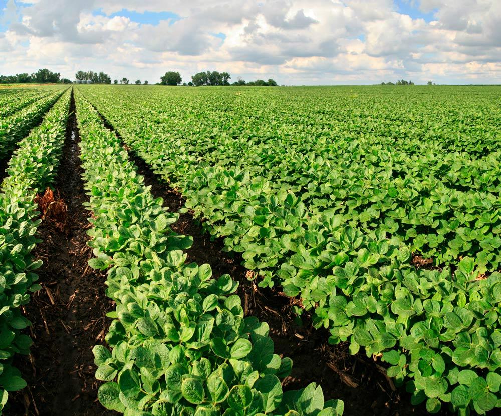 Chemical drift onto organic fields: the phosphonic acid