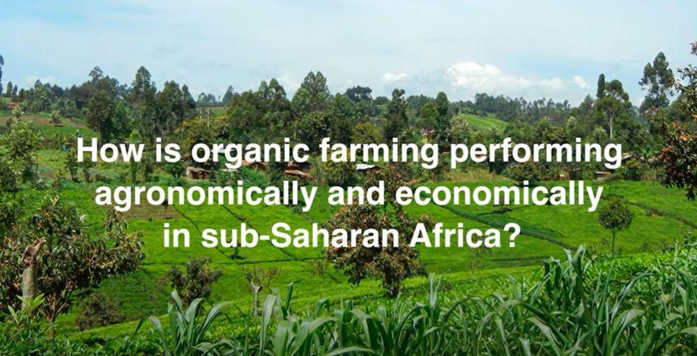 ¿Puede la agricultura ecológica mejorar los rendimientos y los ingresos de los pequeños agricultores en África?